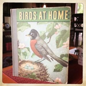 birdsathome