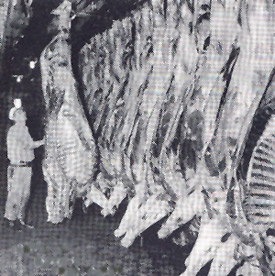 This Quaker Oats photograph shows horse carcasses in the plant cooler in 1948.