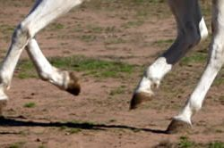 Bolting horses – options for riders