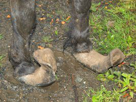 Smudge's hooves