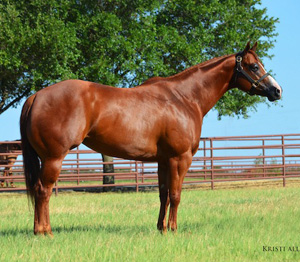 Five time World Champion Halter Mare Pizzazzy Lady is among the horses being sold.