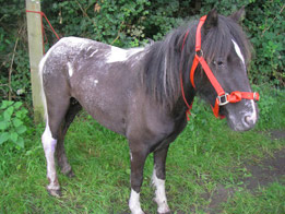 Daisy has been reunited with her owner, but her foal and another mare are still missing.