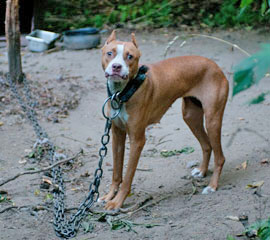 The Animal Fighting Spectator Prohibition Act would crack down on dogfighting.