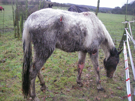 The horse abandoned by a public footpath in Kent.