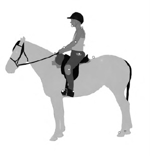 Placement of markers on rider and horse. Rider: chin, cervical vertebra 7 (C7), thoracic vertebra 12 (T12), shoulder, elbow, wrist, hip, knee, ankle and toe. Horse: the spinous processes of the 6th thoracic (T6) and the 1st lumbar (L1) vertebrae, dorsal side hind hoofs.