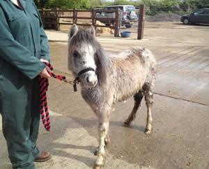Lottie-abandoned-foal