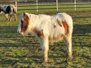 ZZ Top was found with 22 other horses roaming land at Cardiff airport.