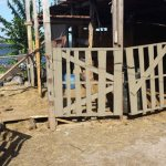 The stables from which Susie and Justice were rescued.