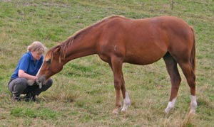 Enriching the lives of horses can aid their learning abilities and help their temperament, say French researchers.
