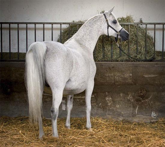 Ekspulsja sold for €400,000.