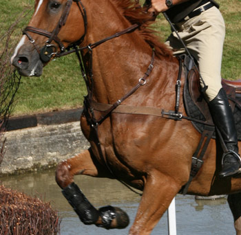 eventing-stock-MB