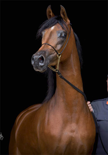 Pietra fetched €95,000.
