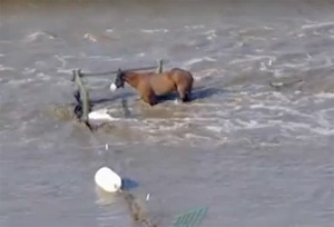 Socks, shown in a still from the above Sky video, is safe and sound after his ordeal.