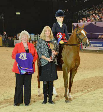 SEIB Search For A Star champion Mathemadam Royal Ensign, owned by Janine Milner and ridden by Morgan Milner.
