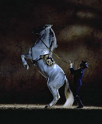 Olympia is hosting performances by PRE horses from the Royal Andalusian School of Equestrian Art in December.