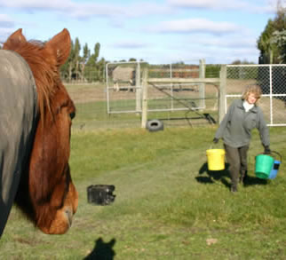 Read more: http://www.horsetalk.co.nz/features/interesting-158.shtml#ixzz2k7AtdSoG Reuse: You may use up to 20 words and link back to this page. Other reuse not permitted Follow us: @HorsetalkNZ on Twitter   Horsetalk on Facebook  Which bucket will he choose? The one with the most in it, according to a UK study.