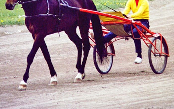 Out-of-competition testing at The Meadowlands revealed high levels of a substance known as Cobalt in two horses.