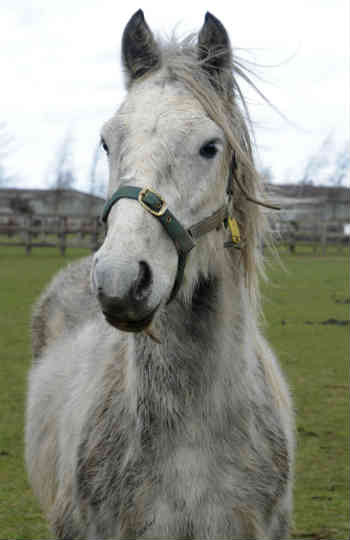 Flicka needs the help of an experienced horse owners willing to help her work through her foibles. Photo: World Horse Welfare
