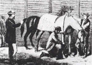A flu-striken horse is treated by blistering.