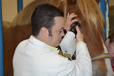 Dr Eric Ledbetter examines a horse's eye using non-invasive in vivo corneal confocal microscopy.
