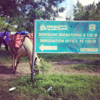 Felipe's pack horse, Frenchie, grazes contentedly. Unaware that a short distance away is the hostile border between Nicaragua and Costa Rica.