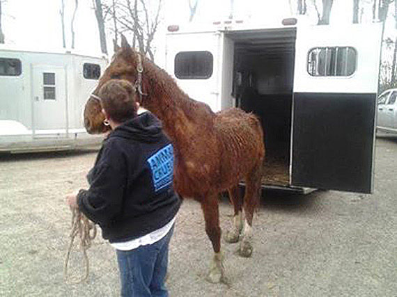Humane Officer Betty Young leads one of the six horses rescued on March 19 in Ross County. Photos: Ohio SPCA/Facebook
