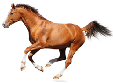 Ataxia caused by Wobbler syndrome affects one in 100 horses, and is one of the greatest sources of missed training days and frustration for horse owners and veterinarians alike.