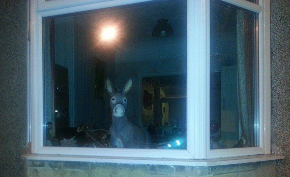Donny has found fame on Facebook. Photo: The Cleethorpes Window Donkey/Facebook