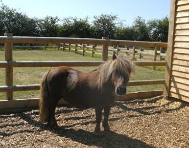 Mr Nibbles is now safe with the charity Bransby Horses in Lincolnshire. Photo: Bransby Horses