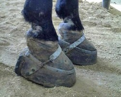 Some auctions breaking law by selling sored horses – HSUS