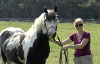 Scientists begin to uncover how horses communicate with their faces