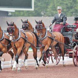 USA's Weber takes WEG driving lead after dressage phase