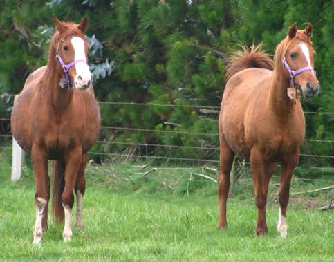 Ready or not? Note the shape of the mare on the right, who foaled less than an hour after the picture was taken.