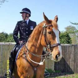 Horse Trust farewells Ross after exemplary life