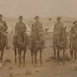 NZ's war horses to be immortalised in film
