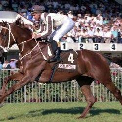 Famed NZ galloper Bonecrusher dies at 32