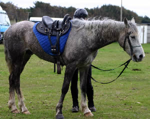 Endurance riders must be careful with electrolyte replacement. Dosing severely dehydrated horses with electrolytes will likely transfer precious water from circulation to the gastrointestinal tract, thus compounding the dehydration.