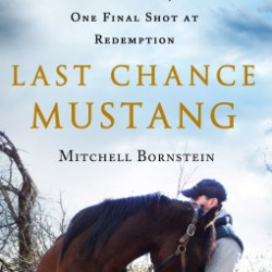 Last Chance Mustang: a story of survival and hope