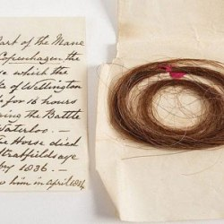 Mane hair from Duke of Wellington's famous mount to be auctioned