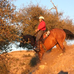 Your horse, you, and fear: constant companions?