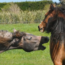 Humans usually behind abnormal aggression in horses – review