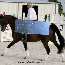 Why your horse should be treated as the athlete he is