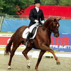 Leading dressage sire Dimaggio dies in Germany at 20