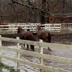 Fifteen trapped horses freed from Indiana floodwaters