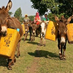Brooke charity rushes to help drought-stricken Ethopian equines