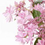 母の日のプレゼントはイイハナドットコムでお花を買いました。どのタイプのお花が喜ばれるか?