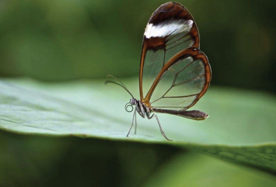 http://www.artisticglobe.com/green-surfer-butterfly.html