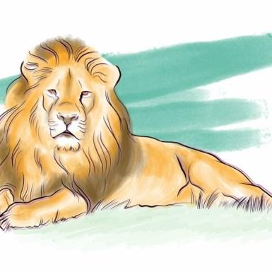 Safari Etiquette