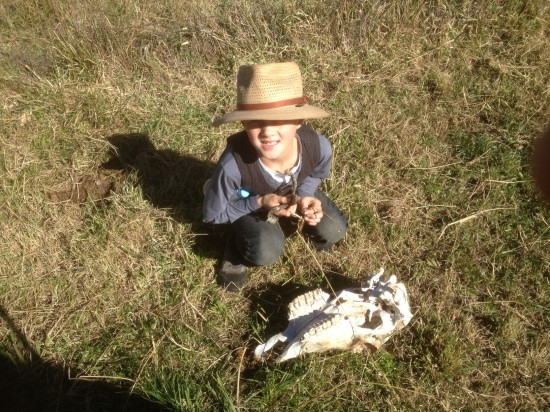Absolutely essential to get right in close to inspect this cow's skull