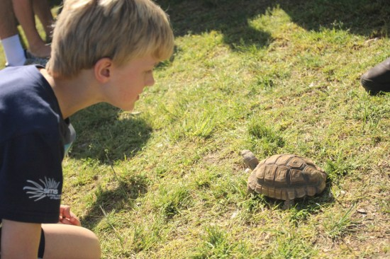 Taronga Zoo supplied some animals for the children - here's a 30-year old tortoise